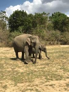 Sri Lanka Safari Day