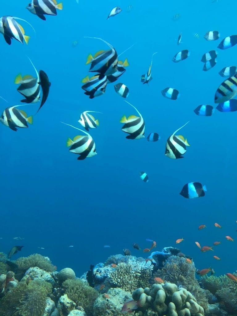 Snorkeling at Anantara Kihavah