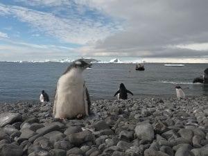 Awe Inspiring Antarctica Cruise